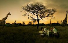 Bush dinner with giraffes as guests
