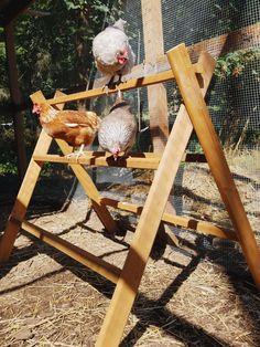 Chicken Run Playground – The Artful Roost Backyard Chicken Coop Plans, Chicken Coop Run, Chicken Coup, Chickens Backyard, Chicken Tractors, Cute Chicken Coops, Chicken Coop Signs, Chicken Pen, Chicken Ladder