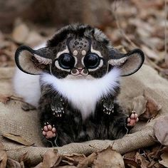 """31.6k Likes, 6,532 Comments - AWESOME EARTH (@awesome.earth) on Instagram: """"TAG SOMEONE  you want to share Inari Fox,Fantastic Japanese Fox"""""""