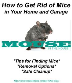 How to Get Rid of Mice In Your Home and Garage - Tips for finding mice, keeping mice out, removing mice that are living in your home, and safe cleanup of mice and their droppings.