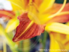 $15 Yellow Lily Photo Print by BeckyTylerArt on Etsy