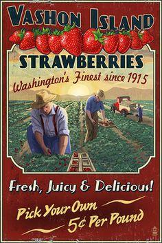 Vashon Island, WA - Strawberry Farm - Vintage Sign - Lantern Press Artwork