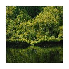 Quand il voit une #grue ou même un #héron , immobile dans les marécages de quelque étang écarté, #digne , #élégante , blanche et #pure , le lettré désire être lui-même une grue. #linyutang #français #lalibela #pleineconscience #extase #méditation #parc #dublin #meditation #vert #green #park