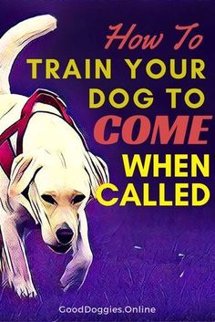 Dog recall training is an important skill to teach your dog or puppy. Check out these dog training tips on how to get your dog to come when called. /KaufmannsPuppy/ #TipsForDogObedienceTraining