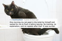 19 Pets On Reddit That Might Have To Get Checked Out
