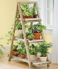 "An indoor herb garden - this looks great! (...and for me, this is yet another ladder style for ""treasure"" display  there's one waiting for me if I want it ... k)"