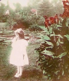 The secret garden...Half of a hand-tinted stereographic photo, 1899