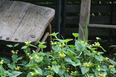 old chair, and window frame Everyday Items, Window, Herbs, Make It Yourself, Chair, Frame, Flowers, Plants, Photos
