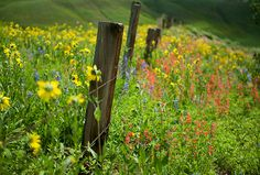 life through jen's lens » Blog Archive » hunting colorado wildflowers (crested butte)