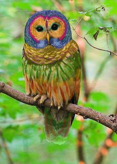 The Rainbow Owl is a rare species of owl found in hardwood forests in the western United States and parts of China. Unlike most owls, which are nocturnal, the Rainbow Owl is active during the twilight hours at dawn and dusk, or on bright moonlit nights.  The Rainbow Owl can be distinguished from other owls by its peculiar multicolored feathers but also by its unusually melodic call.