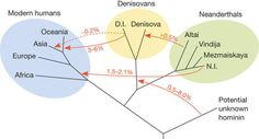 Neanderthal genome shows early human inbreeding and interbreeding | Amazing Science | Scoop.it