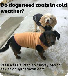 Read what a Petplan