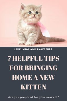 7 Amazing Tips for Bringing Home a New Kitten Thinking about getting a cat? Make sure you check out the seven unique and helpful tips for bringing home your new kitten. Save yourself stress and time with these life hacks for kittens Cute Little Kittens, Baby Kittens, Cats And Kittens, Cats 101, Caring For Kittens, Kittens Cutest, Orange Kittens, Siamese Kittens, Fluffy Kittens