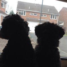 Two little boys - Dughie-Doo & Jojo