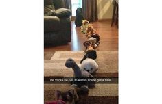 33 Hilarious Snapchats That Prove We Really Don't Deserve Dogs (Slide #32) - Pawsome