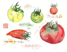 Vintage tomato varieties, Original watercolor painting, kitchen decor, food illustration, vegetable art, french poster, red, eat local. $67.00, via Etsy.