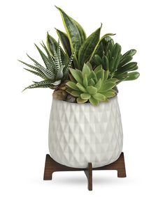 The Mid Mod collection is a curated collection in this modern and trendy footed ceramic container. A combination of Succulents and a snake plant arrives as a gift. #CityLineFlorist