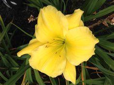 Rébécca des nuances 5 août 2015 2013, Hui, Plants, Front Gardens, Shades, Fall, Accessories, Flora, Plant