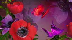 Widescreen Wallpaper, Wallpapers, Hd Desktop, Poppies, Floral Backgrounds, Purple, Plants, Wallpaper, Poppy