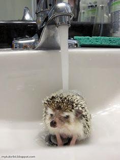 Poggles Likes Baths : Behind Mytutorlist.com