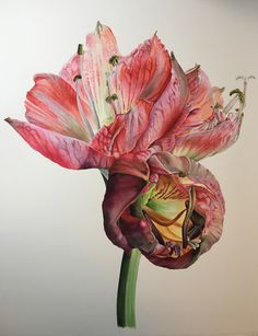 Shortlisted artist: VICTORIA BRAITHWAITE – Amaryllis, Happy Memory, watercolour, 56x65cm. Vote for your favourite artwork in Artists of the Year 2017. http://www.artistsandillustrators.co.uk/shortlist2017 #AOTY2017