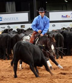 Purchasing Your First Cutting Horse – America's Horse Daily
