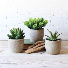 Shelf Ready Succulents - Set of 3
