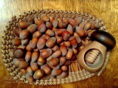 Pic: Hazelnuts