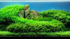 2006 AGA Aquascaping конкурс