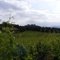 Altipiano Winery--so beautiful!