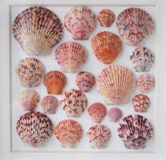 coastal art framed shells