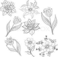 http://www.colourbox.com/preview/4368562-684383-flowers-set-outline.jpg