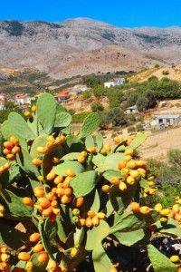 Kochen auf Kreta Griechenland