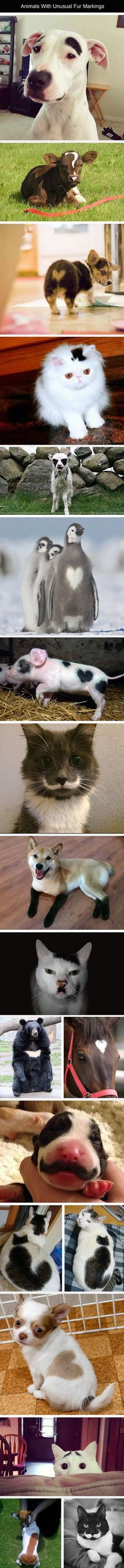Animals With Unusual Fur Markings #funny