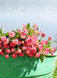 10 ROSA SPRAYROSEN SAFINA® Was für eine Farbenpracht: zehn verzweigte #Rosen der Sorte Safina®, 70 cm lang, erzählen vom #Sommer und von Beschenkten, die sich von #Herzen freuen. // Lieferbar bis zum 09.09.2015 #blumen #flowers #roses #pink #summer #summertime #sommerzeit #blüten #sprayrosen #blume2000 #blume2000.de