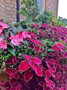 Love the vibrant colors of the New Guinea Impatiens and the Coleus: