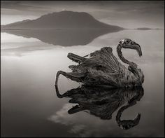 There's a deceptively still body of water in Tanzania with a deadly secret—it turns any animal it touches to stone. The rare phenomenon is caused by the chemical makeup of the lake, but the petrified creatures it leaves behind are straight out of a horror film.