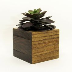 Small wood hanging succulent planter modern cube plant for Wooden cactus planter