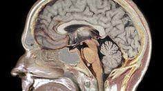 7 dicas da neurociência para melhorar a sua concentração