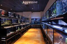 Cichlid Row  Freshwater Fish Department Aquarium Store, Home Aquarium, Aquarium Fish, Discus Tank, Fish Tank, Reptile Zoo, Fish Room, Fish Gallery, Store Plan