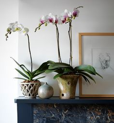 "Courtney Barnes, ""The Best Orchid Pots,"" The Wall Street Journal (14 February 2014). From left: Gothic Arch Bowl, 5 inches tall, $24, shopterrain.com; and Aged Orchid Planter, 7 inches tall, $36, campodefiori.com. Photo by Stephen Johnson."