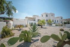 Casa Magnifica garden is exotic with cactuses, palm and beautiful flowers home Vacation Homes For Rent, Naxos Greece, Luxury Villa, Beautiful Islands, Beautiful Flowers, Exotic, Palm, Mansions, House Styles