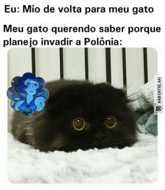 Nois vira Hitler do nd Top Memes, Best Memes, Funny Images, Funny Pictures, Baby Animals, Cute Animals, Funny Statuses, Comedy Memes, Funny Animal Memes