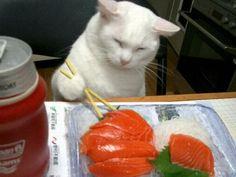 Sashimi Cat