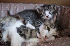 .momma cat & kitten.