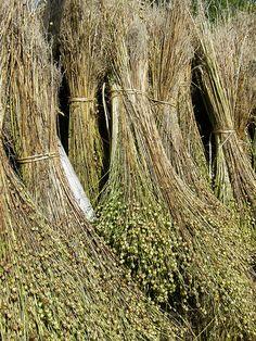 gavilla s. f. 1   Conjunto de ramas o tallos unidos o atados por su centro, más grande que un manojo y más pequeño que un haz. 2   Conjunto numeroso de personas, animales o cosas.