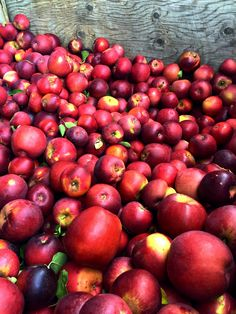 Arkansas Black Apples from Boa Vista Orchards!