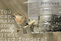 "Wherever you are in the ""We Love our Feathered Friends"" game, there are homemade bird feeders on this list for you."