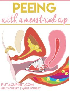 Peeing With A Menstrual Cup                                                                                                                                                                                 More