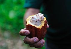 Cacao vs Chocolate: Is there a difference?